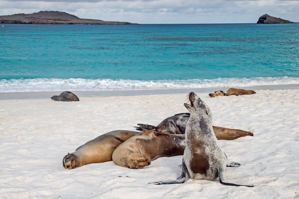 Galapagos tours in Ecuador